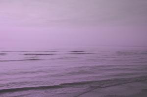 paarse zee